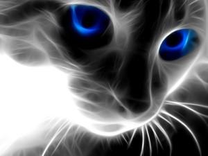 smoke cat