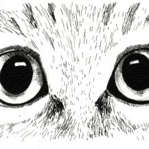 Cat Study 2