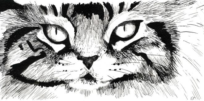 Cat Study 3