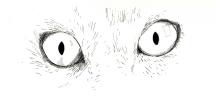Cat Study 4