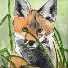 fox-cub