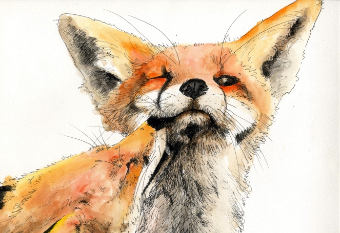 foxes001